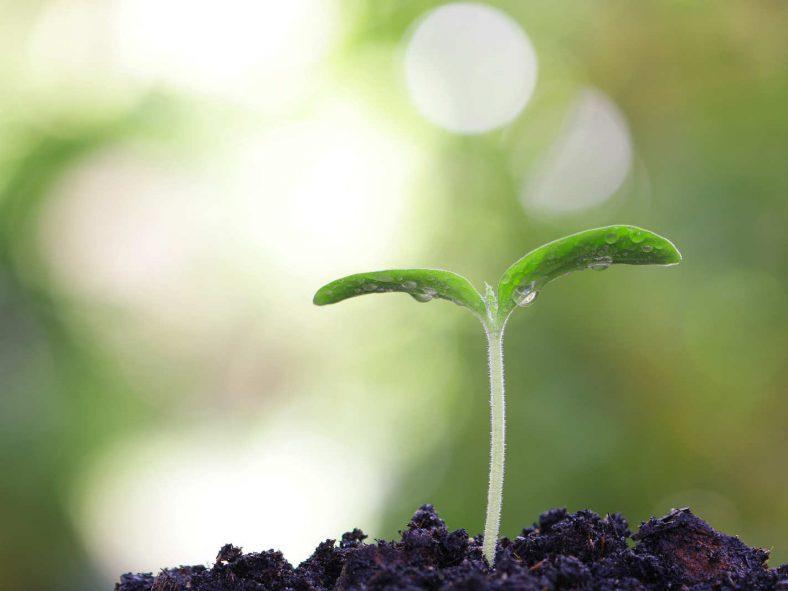 Symbolisches Bild - Ein Keimling einer Pflanze - hoffentlich wächst auch die Blogparade